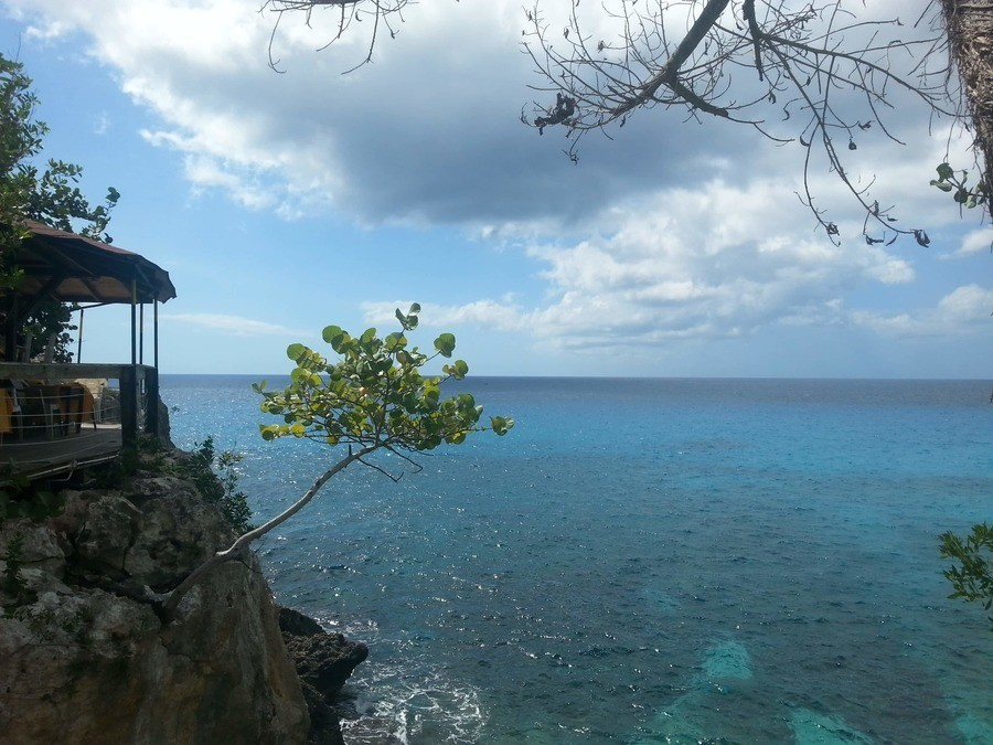 Tree on a cliff - Negril, Jamaica