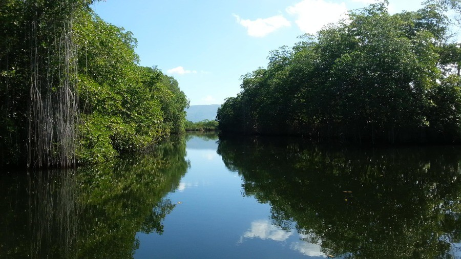 Mangrove trees on Black River, Negril, Jamaica
